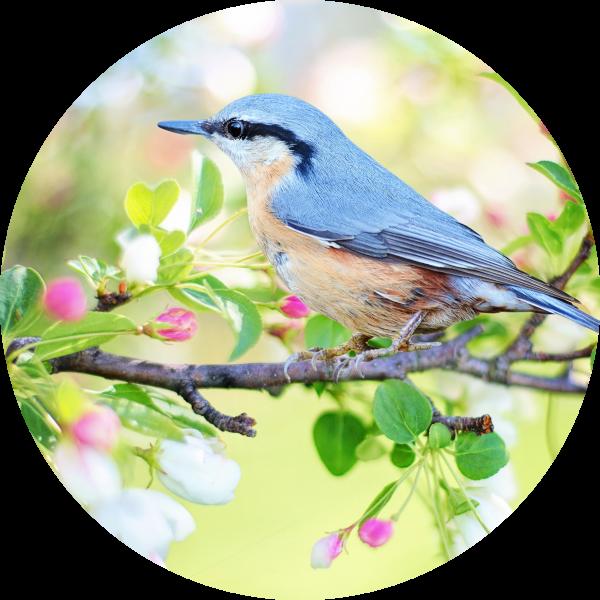 Tortenaufleger Vogel